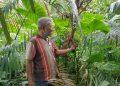 Madi Hensly Purba sedang memegang buah Jernang yang beberapa waktu lagi sudah bisa  dipanen. (foto : HTP)